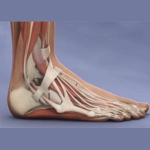 Image of Foot & Ankle Arthroscopy, Achiles Tendinitis ,Socal Foot Ankle Doctors